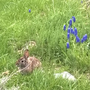 This sweet little bunny was in my herb garden this morning, reminding me to be present in each moment.